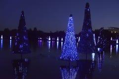 Jul dekorerade granträd i Orlando Arkivbilder