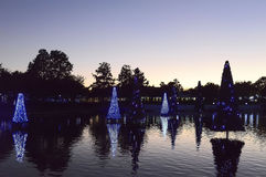 Jul dekorerade granträd i Orlando Royaltyfria Bilder