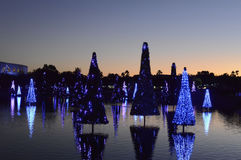 Jul dekorerade granträd i Orlando Royaltyfri Fotografi