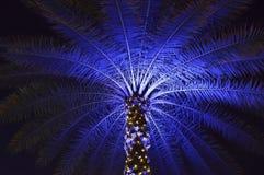 Jul dekorerade palmträdet i Orlando Arkivfoton