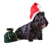 Jul dog i jultomtenlock Arkivbilder