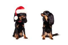 Jul Dog i Santa Hat retade den lilla hunden Royaltyfri Foto