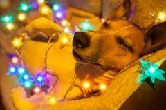 Jul dog med felika ljus Fotografering för Bildbyråer