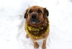 Jul Dog på den bärande girlanden för snö Arkivbilder