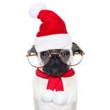 Jul dog som Santa Claus Royaltyfria Bilder