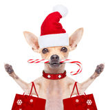 Jul dog som Santa Claus Royaltyfri Foto