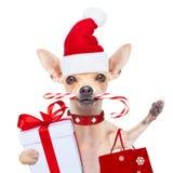 Jul dog som Santa Claus Arkivbild