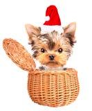 Jul dog som santa i en korg Fotografering för Bildbyråer