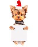 Jul dog som santa med banret Fotografering för Bildbyråer