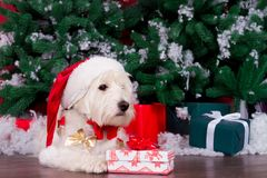 Jul Dog som symbol av det nya året Arkivbilder