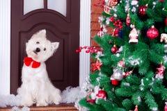 Jul Dog som symbol av det nya året Arkivbild