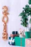 Jul Dog som symbol av det nya året Royaltyfria Bilder