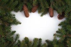 Jul inramar med isolerade filialer av julgranen royaltyfria foton