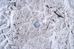 Jul klumpa ihop sig på filialen i snöig skog royaltyfri bild