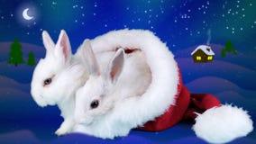 Jul kopplar ihop kaniner som sitter i den Santa Claus hatten arkivfilmer