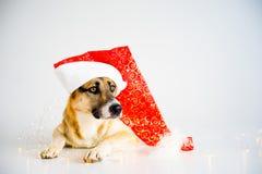 Jul med en hund Arkivfoto