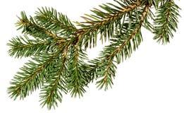 jul min version för portföljtreevektor gran isolerad treewhite Royaltyfri Foto
