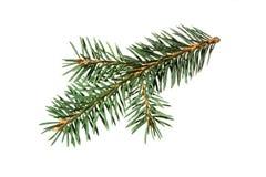 jul min version för portföljtreevektor gran isolerad treewhite Royaltyfri Fotografi