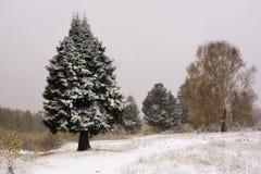 jul min version för portföljtreevektor Plats för snö för vinterpälsträd Julbakgrund, snö och sörjer trädet Arkivfoton
