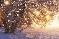 Jul Natur Vinterlandskap med skinande snöflingor Glödande ljus på Xmas-ferier Frostiga träd i solljus royaltyfri foto