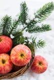 Julсomposition med röda äpplen och filialen av jul t Royaltyfria Bilder