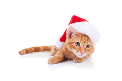Jul Santa Cat Arkivfoto