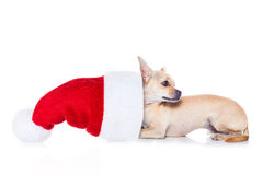 Jul Santa Dog Arkivfoton