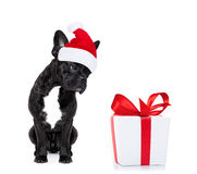 Jul Santa Dog royaltyfria foton