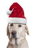 Jul Santa Hat Dog Fotografering för Bildbyråer