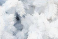 Jul semestrar vit bakgrund för utrymmetext royaltyfria foton