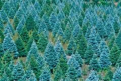 jul som skördar klara trees Arkivbilder