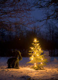Jul tree.JH Royaltyfria Bilder