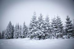 julbakgrund av det snöig vinterlandskapet royaltyfri foto