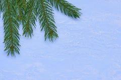 Julbakgrund av gran förgrena sig på blå dekorativ murbruk Arkivfoto
