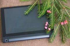 Julbakgrund med den gröna granen förgrena sig med rosa anständigheter Royaltyfri Foto