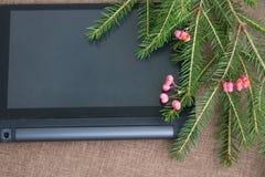 Julbakgrund med den gröna granen förgrena sig med rosa anständigheter Arkivfoton