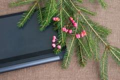 Julbakgrund med den gröna granen förgrena sig med rosa anständigheter Royaltyfri Fotografi