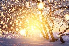 Julbakgrund med glödande snöflingor Glänsande magiska ljus i vinternatur Landskapvintersaga arkivbild