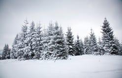 Julbakgrund med snöig granträd royaltyfri bild