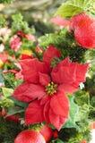 Julblomma - julstjärna Arkivfoto
