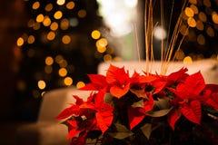 Julblommakort med guld Royaltyfri Foto