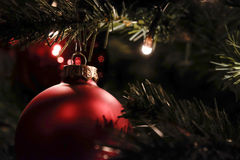 Julboll i träd royaltyfri fotografi