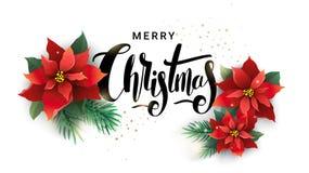 Juldesign av julstjärna- och granfilialer Arkivbilder