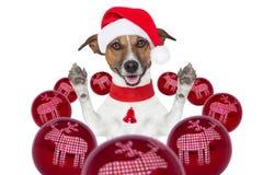 Julen dog med den santa hatten och bollar Royaltyfri Fotografi