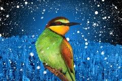 Julfågel mot bakgrunden av vinterlandskapet Fotografering för Bildbyråer