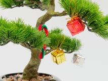 Julgarnering eller prydnadhängning på konstgjort bonsaiträd komponerade av den röd, guld- och silvergåvaasken som isolerades på v Arkivfoto