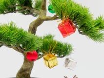 Julgarnering eller prydnadhängning på konstgjort bonsaiträd komponerade av den röd, guld- och silvergåvaasken som isolerades på v Royaltyfri Foto