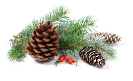 Julgarnering med granträdet och kottar som isoleras på en vit bakgrund Fotografering för Bildbyråer