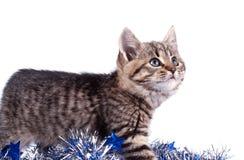 Julgarnering med katten Royaltyfri Foto