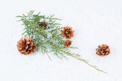 Julgrönska Fotografering för Bildbyråer